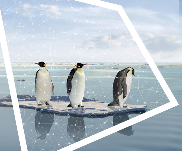 Penguins standing on ice, surrounded by water, and framed by the Forum for the Future 'window' logo